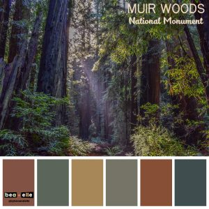 Bea + Elle - Color Inspiration - Muir Woods